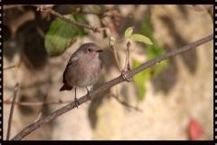 Kleiner Vogel in Tartlau