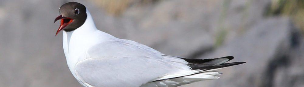 Vogelfreunde.net